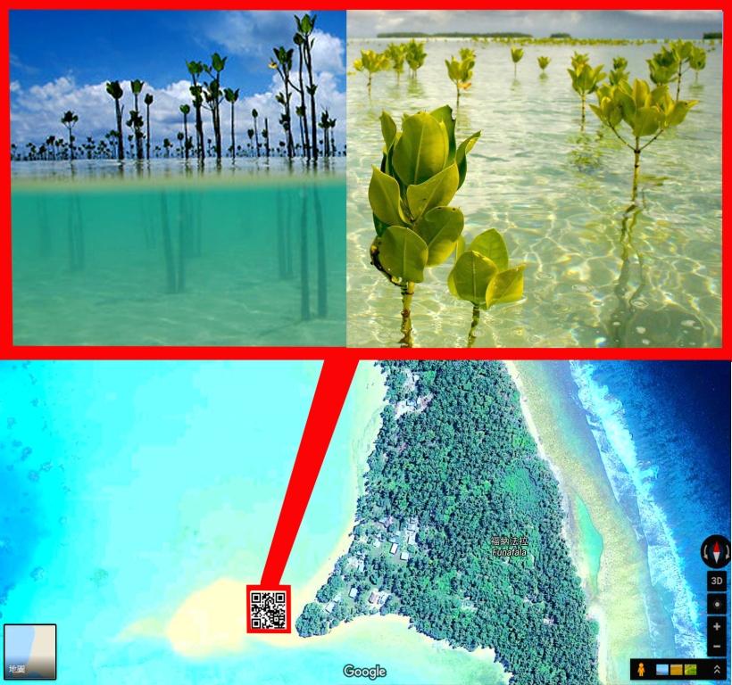 tv-mangroves-0